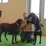 Trickdog 27.01.2013